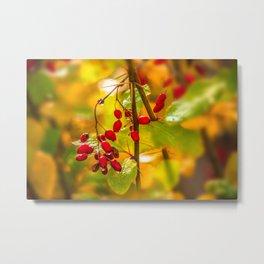 Autumn drops Metal Print