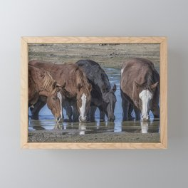 Mustangs Sharing What's Left of the Water Framed Mini Art Print