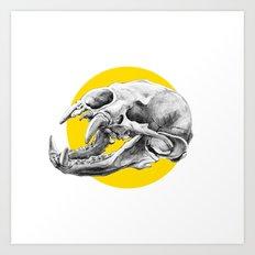 Bear Skull Art Print