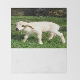 A Newborn Lamb Finding Its Feet Throw Blanket