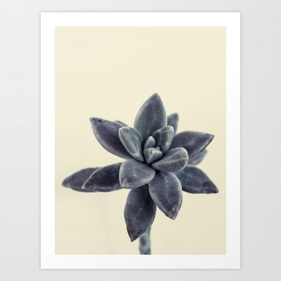 flower succulents plants Art Print