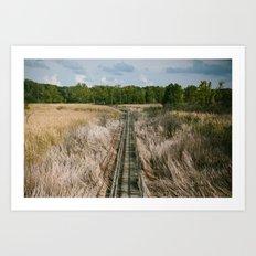 Ohio Swamp II Art Print