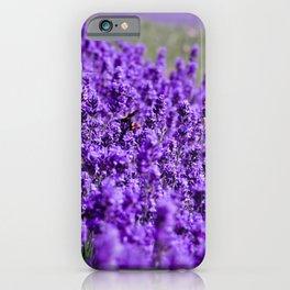 Lavandula iPhone Case