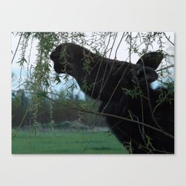 Missy Willow Canvas Print