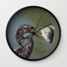 Anhinaga with a Fish ,close up Wall Clock
