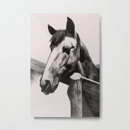 Horse Greeting A Stranger Metal Print
