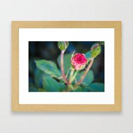 """""""Rose Bud"""" Framed Art Print"""