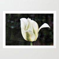 tulip Art Prints featuring Tulip by Christine baessler