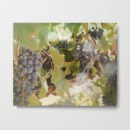 Grapevine Metal Print