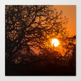 Sultry sun setting behind the sausage tree Canvas Print