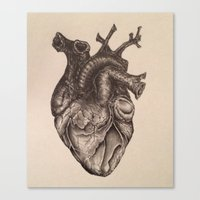 anatomical heart Canvas Prints featuring Anatomical Heart by Redmonks