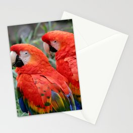Scarlet Macaws Stationery Cards