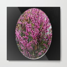 Red bud tree  through my window... Metal Print