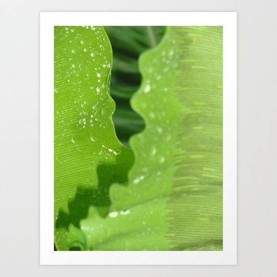 dew drops. Art Print