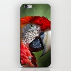 Scarlet Macaw iPhone & iPod Skin