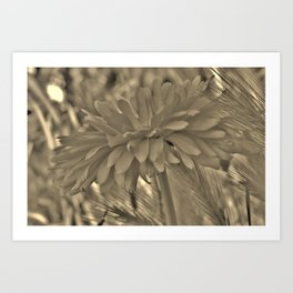 Petals From the Side Art Print