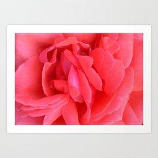 Pretty n Pink Rose Art Print