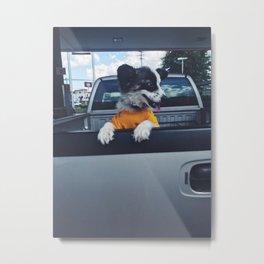 Dogs in Trucks Metal Print