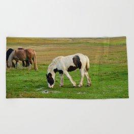 Gypsy_Vanner Filly 5506 - Colorado Beach Towel