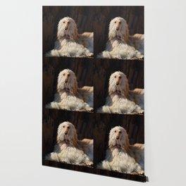 Afghan Hound Portrait Wallpaper