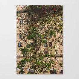 Urban Garden Canvas Print