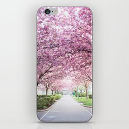 Sakura tree street iPhone Skin