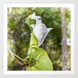 Delicate butterfly tree flower Art Print