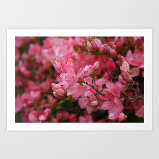Flowering crabapples in the Rain Art Print
