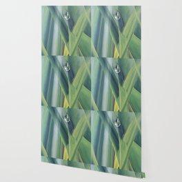 A drop of water Wallpaper