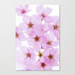 Cherry Blossom Flowers at Yoyogi Park in Tokyo Japan Canvas Print