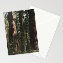 Sunlit California Redwood Forests Stationery Cards