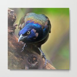 Uncommon Beauty Metal Print