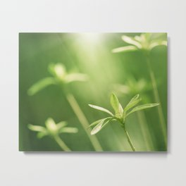 Green Nature Photography, Green Leaves Botanical Art Photo, Colorful Modern Print Metal Print