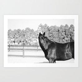 Black & White Bubba Art Print