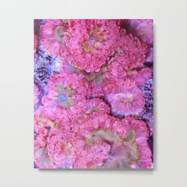 Cotton Candy Blastomussa Merletti (blasto coral) Metal Print