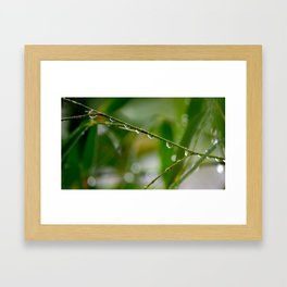Droplets on Bambo  twiggs  Framed Art Print