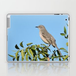Northern Mockingbird Looks South Laptop & iPad Skin