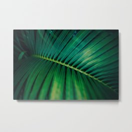 Green Leaf Palm Frond Photo Metal Print
