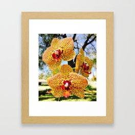 Phalaenopsis Orchid, Yellow & Magenta Framed Art Print