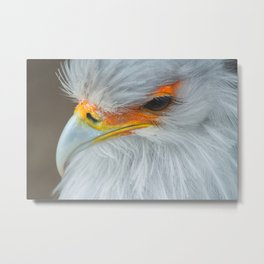Feathers and eyelashes Metal Print