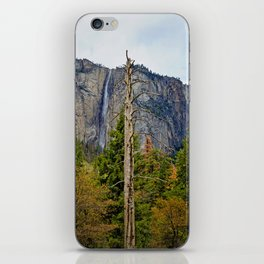 Tree In Yosemite iPhone Skin