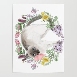 Pixie the Chocolate Siamese Cat Poster