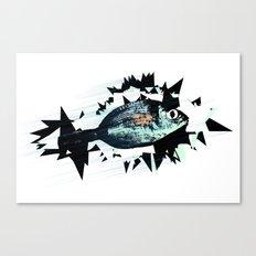 bream fish Canvas Print