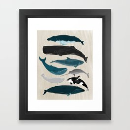 Whales - Pod of Whales Print by Andrea Lauren Framed Art Print
