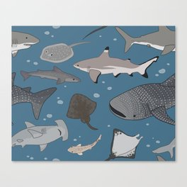 Sharks and Rays Canvas Print