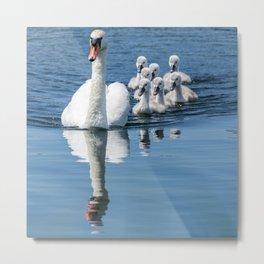 Family of swans Metal Print