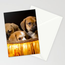 Pumpkin Basket Filled with Two Puggle Puppies and a Beaglier Puppy for Halloween Stationery Cards