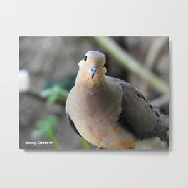 Such a Sweet Face Metal Print