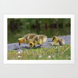 goslings getting their grub on Art Print