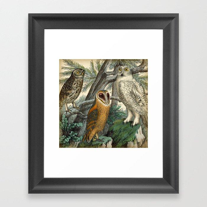 3 Owls Gerahmter Kunstdruck
